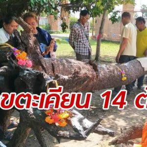 ชาวบ้านแห่แหนขอเลขเด็ด ครอบครัวเจ้าแม่ตะเคียนทอง 14 ต้น