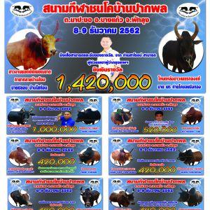 โปรแกรมวัวชนจากสนามกีฬาชนโคบ้านปากพลพระ 2562/12/8
