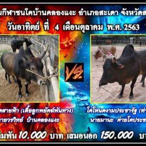โปรแกรมวัวชนจากสนามกีฬาชนโคบ้านคลองเเงะ สัปดาห์นี้ 4 ตุลาคม 2563