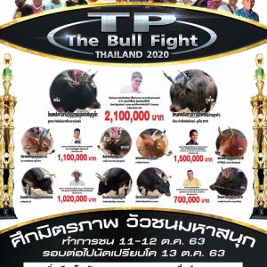 TP The Bull Fight Thailand2020 ศึกมิตรภาพ วัวชนมหาสนุก โปรแกรมวันที่ 11-12 ตุลาคมนี้
